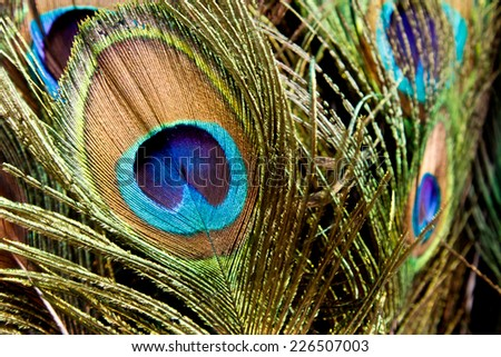 detail of peacock feather. Vivid color peacock feather with eyes. Elegant colorful decoration pattern. Indian religion texture - stock photo