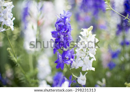 Detail of purple and white flowers with shallow DOF - stock photo