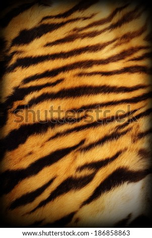 detail of real tiger textured pelt with added vignette, natural pattern - stock photo