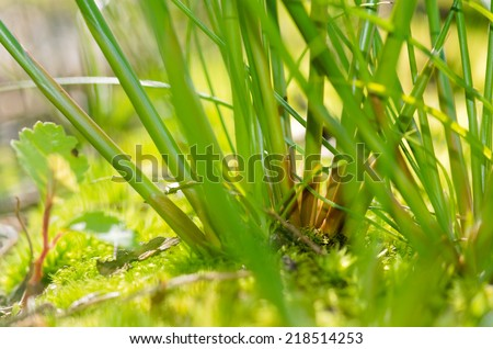Detail of rush, moss and grass plants covering the ground in the forest.  - stock photo
