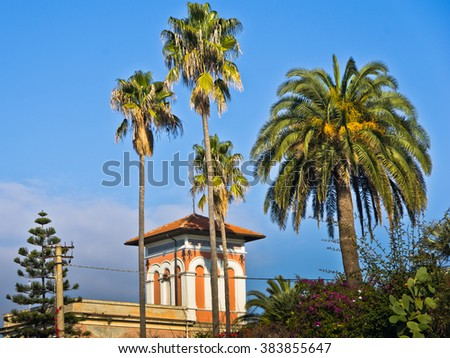 Detail of Sardinian vilas with palm and pine trees in Cagliari, Sardinia, Italy - stock photo