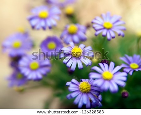 Detail of small purple aster flowers. - stock photo