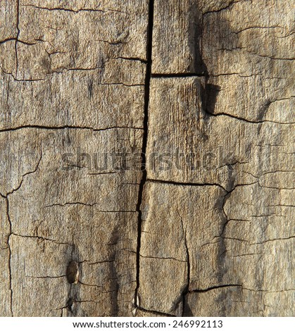 Detail of the bark of a dead tree - stock photo