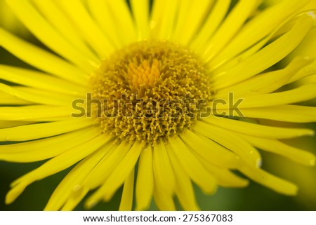 Detail of the yellow Flower - stock photo