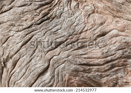 detail of weathered driftwood - stock photo