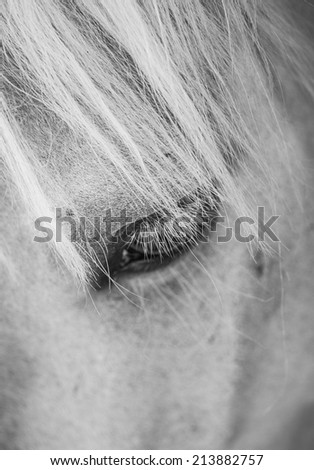 Detail of white horse head with long eye-lashes and mane - stock photo
