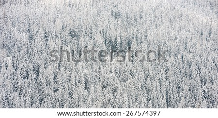 Detail of winter country with snow covered trees in forest - stock photo