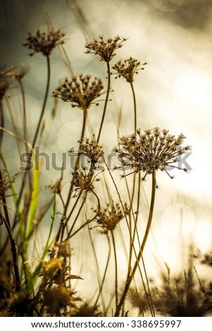 Detail of withered and dry wild plants on the blurred background - stock photo