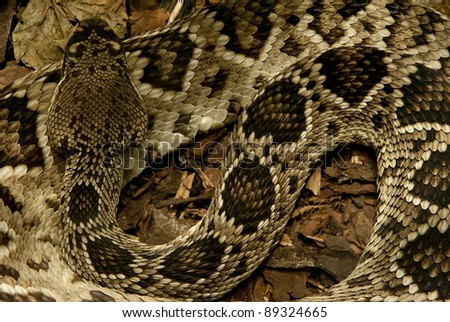 Detailed background of a large python snake sleeping - stock photo