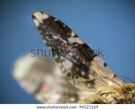 Detailed Magnified Macro of a Fruit Fly Wing - stock photo