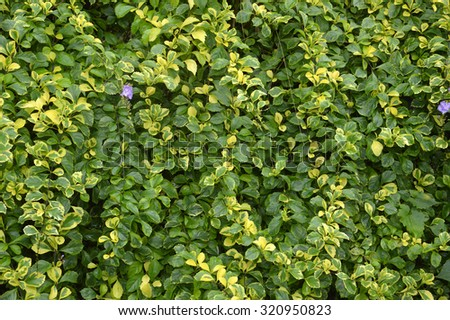 detailed of pattern leaf texture - stock photo