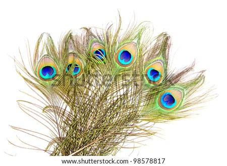 Detailed photo of a bunch of beautiful vivid peacock feathers isolated on white - stock photo