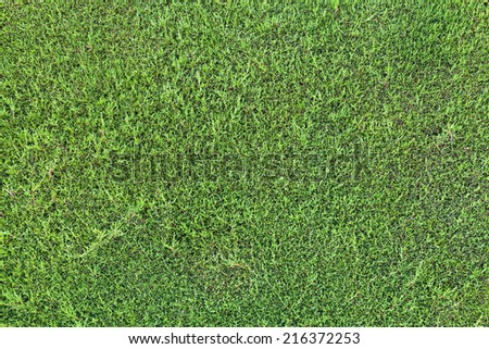 Detailed photo texture of green hedgerow wall  - stock photo
