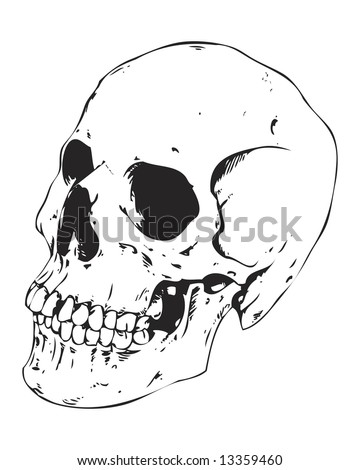 detailed side view skull image - stock photo