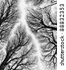 Detailed tree branches or Heavenly road (black and white) - Russia - stock photo