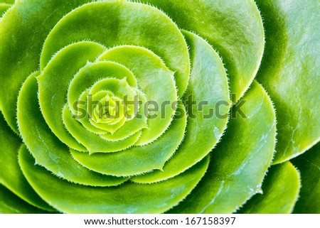 Details of a succulent plant - stock photo