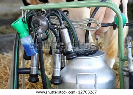 details of milking machines for cow udders - stock photo