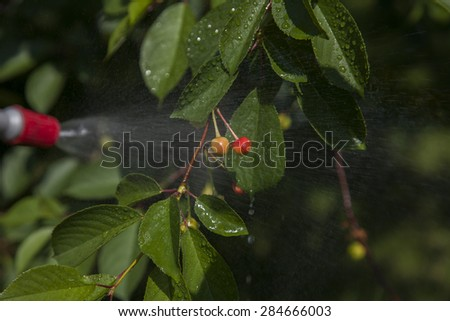 Device of spraying pesticide sprinkle liquid to unripe berries cherries from red nozzle. - stock photo