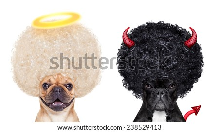 Devil and Angel fawn french bulldog dogs sitting side by side deciding between right and wrong , good or bad, isolated on white background - stock photo