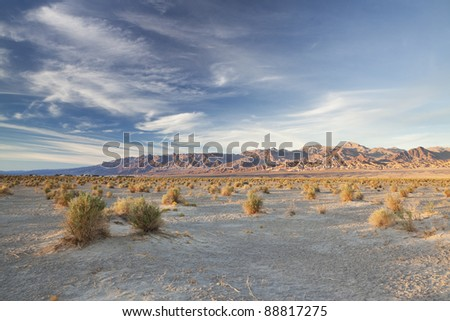 Devil's Corn Field in Death Valley, California - stock photo
