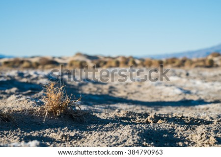 Devil's Corn Field near Stovepipe Wells Village, Death Valley National Park - stock photo