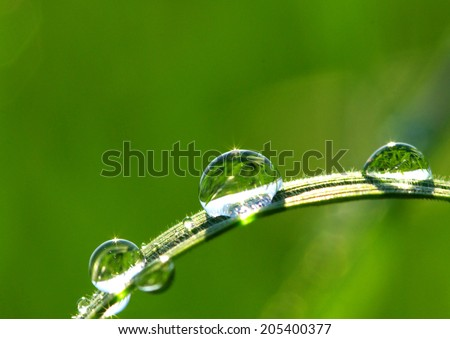 Dew drop on a blade of grass  - stock photo
