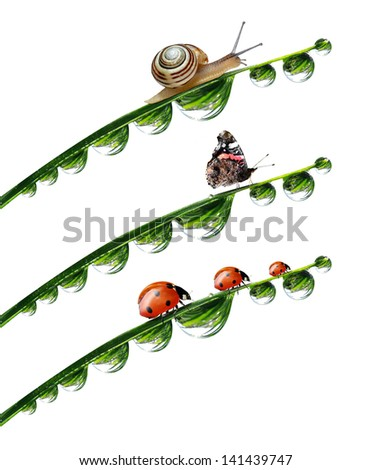 dew drop with snail,butterfly and ladybugs isolated on white - stock photo