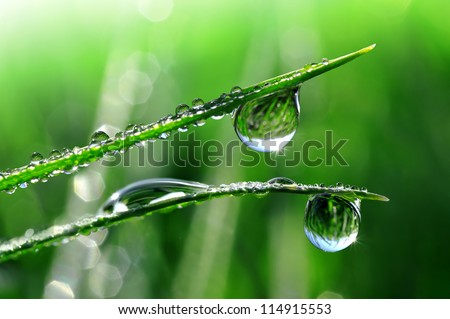 Dew drops close up - stock photo