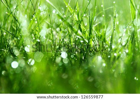 Dew drops on grass, shallow depth of field - stock photo