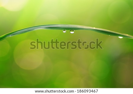 Dew drops on leaves close up - stock photo