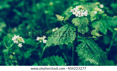 Dew on a leaf with white flower in spring after rain. Drops of dew on a fresh green leaves and flowers. Fresh green leaf branch with water drops closeup. Nature Background. Toned photo. - stock photo