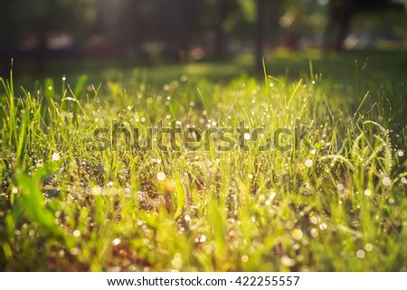 Dew on fresh green grass, sunny morning in the meadow. Blurred background. - stock photo