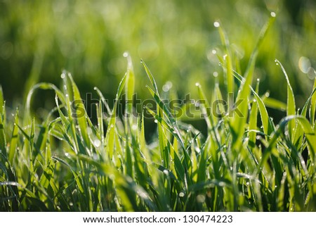 Dew on grass - stock photo