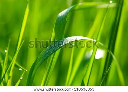 dew on green grass in sunlight - stock photo