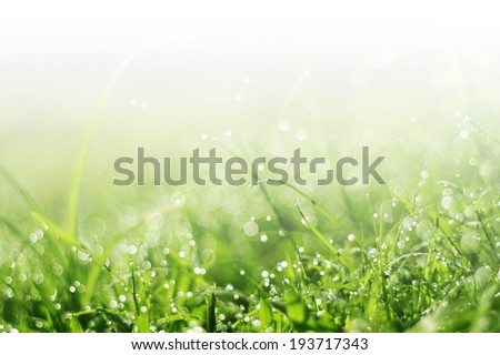 Dew on green grass under the morning sunlight. - stock photo