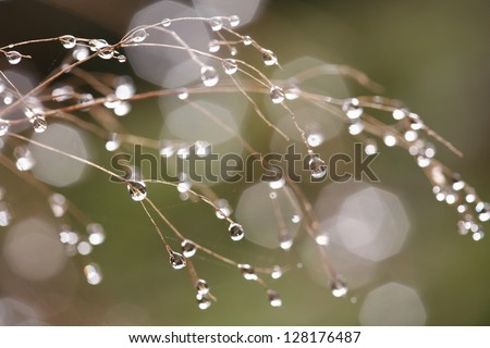 Dew on leafless branches - stock photo