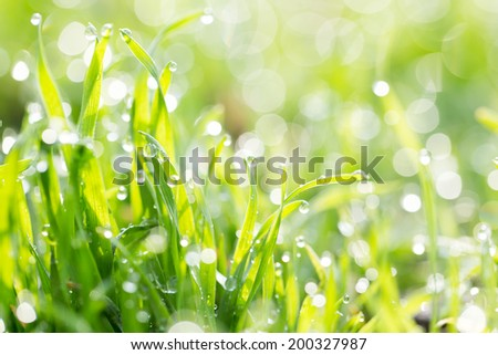 dew on the grass in nature - stock photo