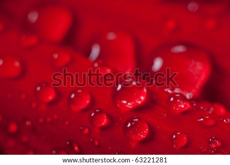 Dew on the leaves of red flower - stock photo