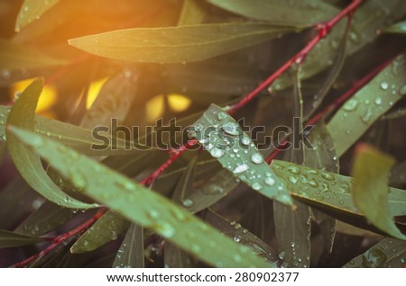 dew on the leaves,vintage effect,Shallow DOF - stock photo