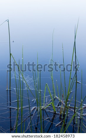 Dewdrops and spiderwebs on a misty morning, at a shore of a small lake in Finland - stock photo