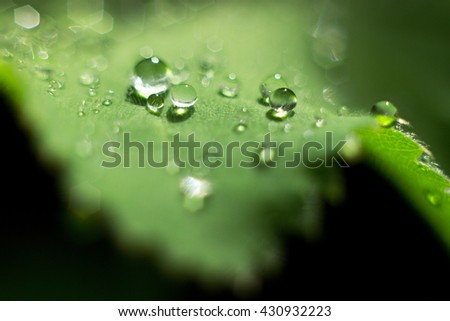 dewdrops on a green leaf - stock photo