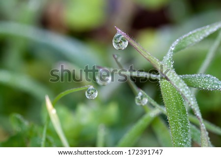 Dewdrops on Blades of Grass - stock photo