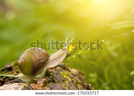 Dewy grass and snail - stock photo