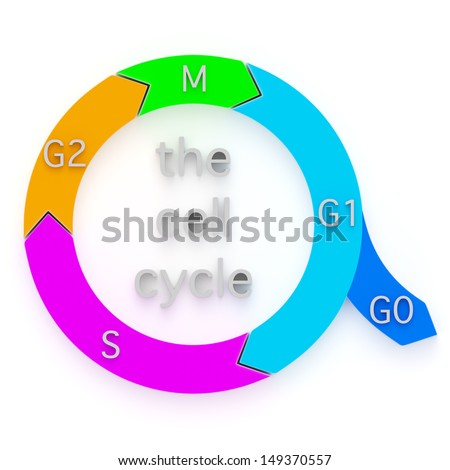 Diagram showing the sequential phases of the Cell Cycle, or cell-division cycle, during which an eukaryotic cell duplicates and replicates itself by division into daughter cells - stock photo