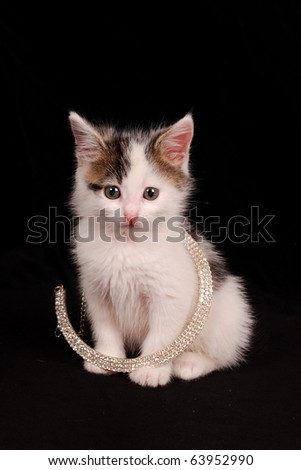 diamond kitten - stock photo