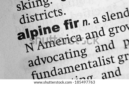 Dictionary definition of the word Alpine Fir - stock photo