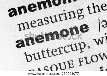 Dictionary definition of the word Anemone - stock photo