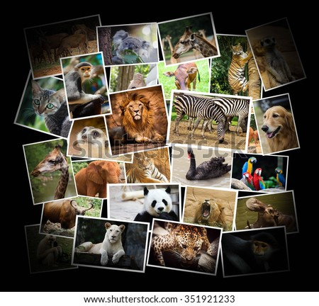 Different animal collage in the zoo - stock photo