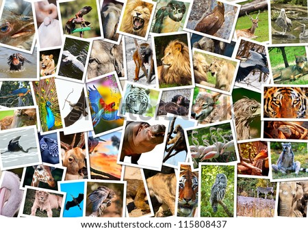 Different animals collage  on postcards - stock photo