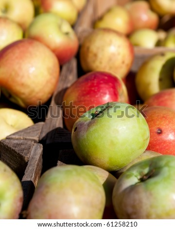 Different apples from an orchard in bins for sale in a stall at the Reston Virginia Farmer's market. - stock photo